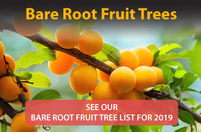 Bare Root Fruit Trees
